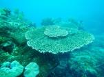 Shark Point Reef