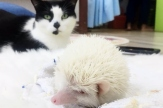 With Peanut the Hedgehog