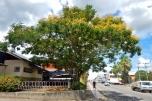 Tree in Tenom