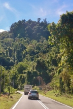 Road into the Jungle