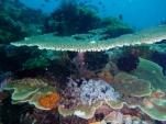 Mayne Reef