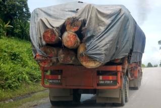 big logs