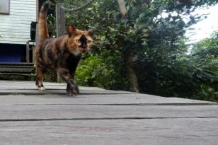 lodge cat