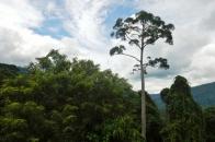 maliau forest