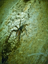 09 Cave Bug