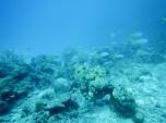 Pulau Basung Reef