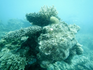 Pulau Mandariau Reef