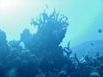 Pulau Setuju Reef